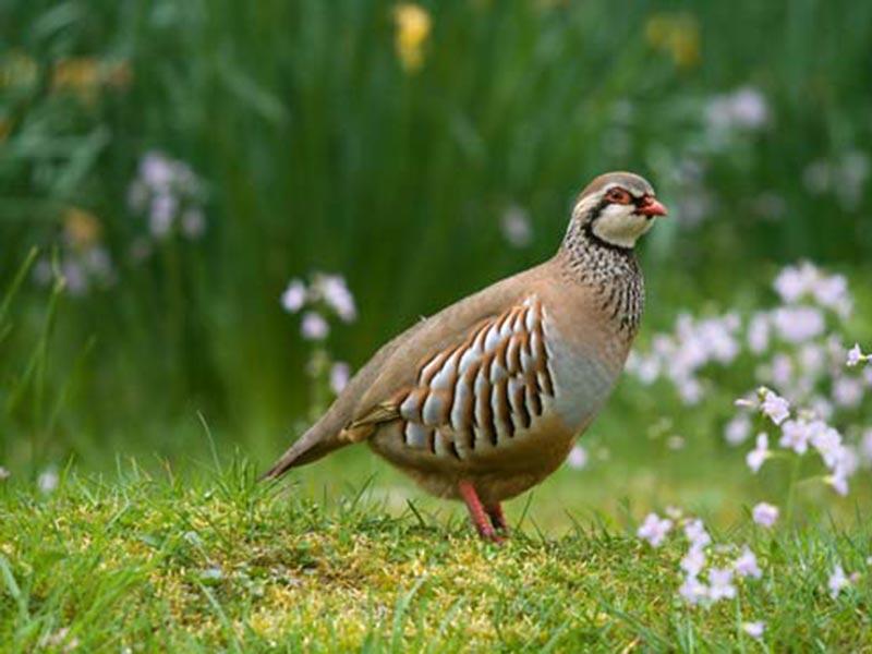 سه نفر متخلف شکار و زنده گیری غیرمجاز پرندگان در ارتفاعات شهرستان مهاباددستگیر شدند 4