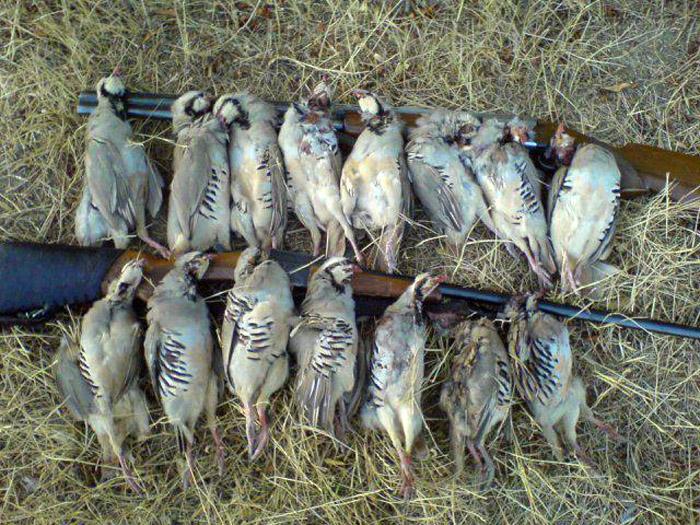 دستگیری چهار شکارچی متخلف در سردشت