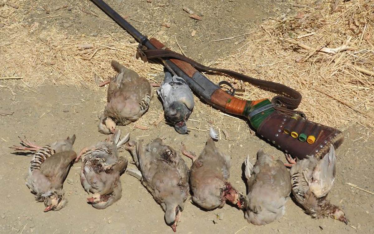 ۶۲ شکارچی متخلف در پیرانشهر دستیگر شدند