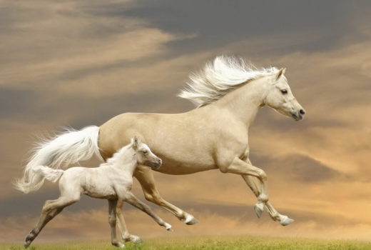مهر مادری در بین حیوانات /بالویز