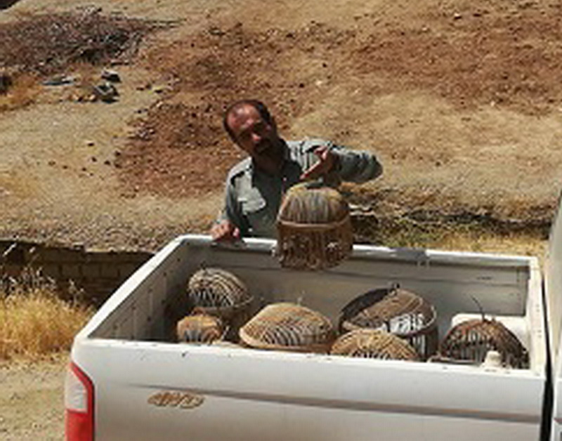 شکارچیان متخلف در بوکان دستگیر شدند