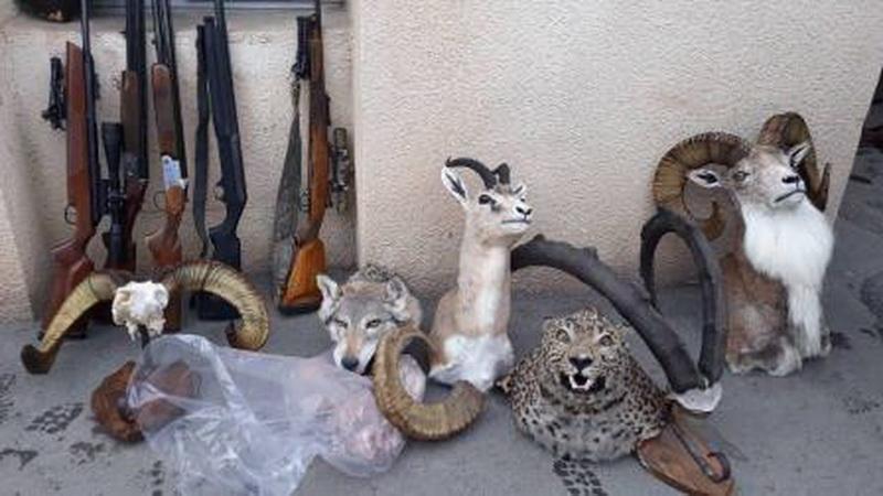 کشف و ضبط 5 قبضه سلاح شکاری و تاکسیدرمی در نقده