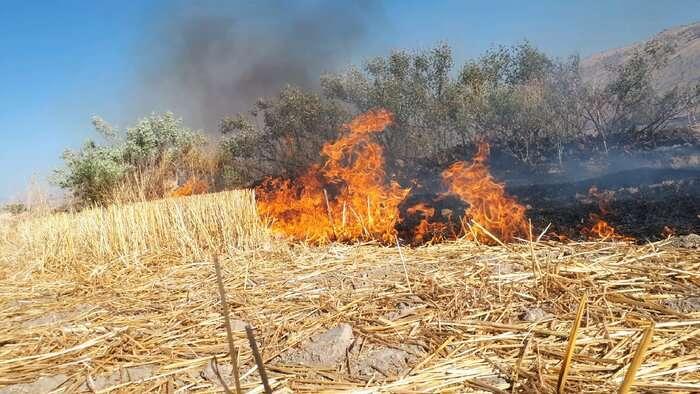 بی احتیاطی باعت آتش سوزی پوشش گیاهی در دو منطقه مهاباد شد