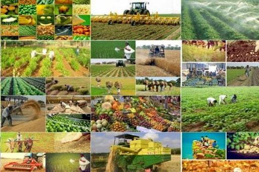 ۵۱ پروژه کشاورزی درگرامیداشت دهه فجرامسال در سقزافتتاح می شود