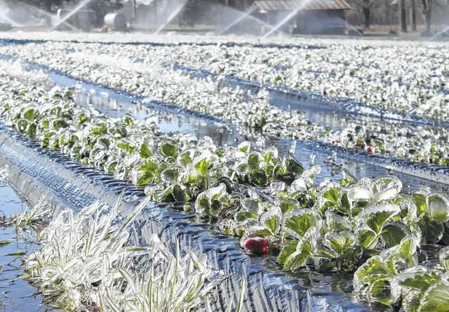 کاهش دما در 27 استان و توصیه به کشاورزان درجهت جلوگیری از خسارات