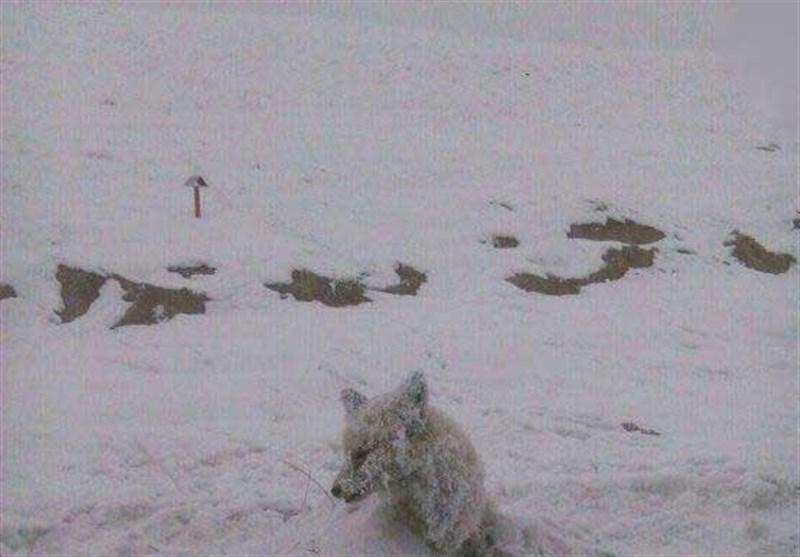 در فصل سرما با حیوانات مهربان باشیم