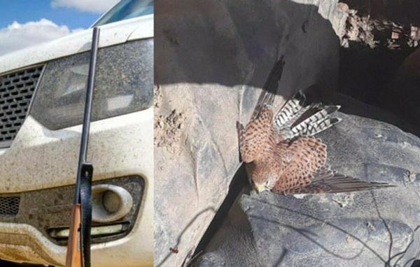 شکارچیان متخلف در مهاباد توسط یگان حفاظت محیط زیست دستگیرشدند