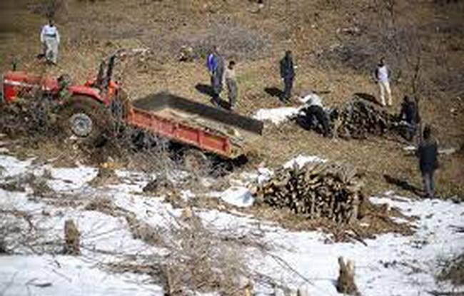 """یک تن مقطوعات چوب جنگلی در """" مریوان """" کشف و ضبط شد"""
