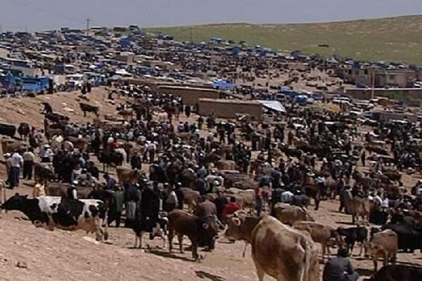 """میدان""""دواب""""بوکان تعطیل شد"""