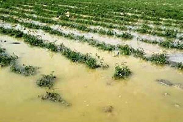 بیش از ۲۶۳ میلیارد ریال به محصولات باغی و زراعی آذربایجان غربی خسارت وارد شد