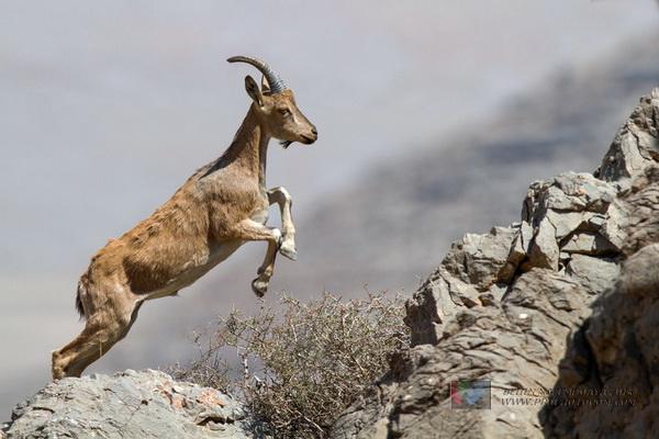 شکارچیان سابقه دار در پیرانشهر دستگیر شدند