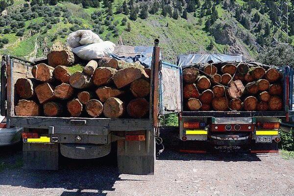 دو محموله چوب قاچاق در مهاباد توقیف شد