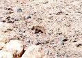 ویدئو / مشاهده یک قلاده خرس در منطقه سالال دیواندره استان کردستان