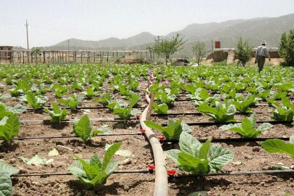 افتتاح ۵۲ طرح عمرانی و کشاورزی در سردشت