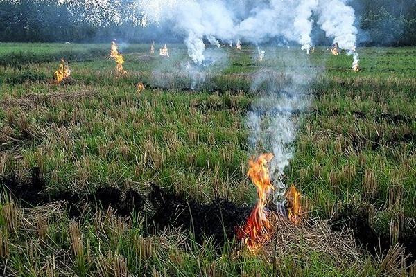 آتش زدن بقایای محصولات کشاورزی چالشی برای محیط زیست و آتش نشان ها شده است