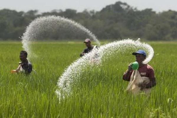 امسال 92 هزار تن کود به کشاورزان آذربایجان غربی اختصاص یافت