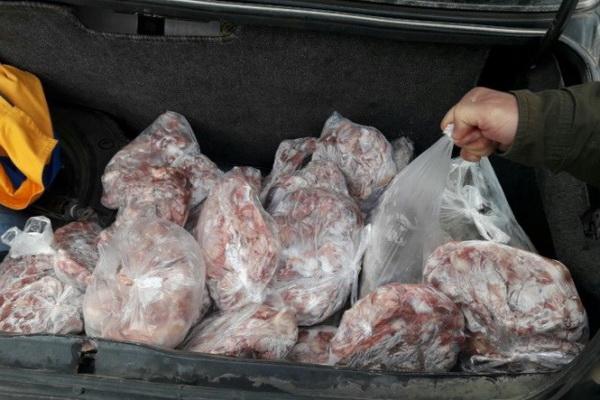 بیش از نیم تُن گوشت فاسد در تکاب امحا شد