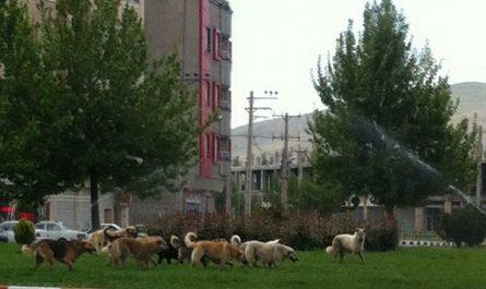 مشکلات سگهای بلاصاحب در جلسه شورای اسلامی شهر مهاباد بررسی شد