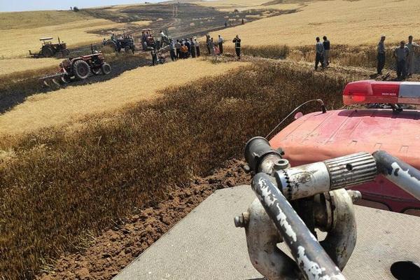 بیش از 10 تن نخود در مزارع بوکان طعمه حریق شد