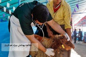 دامپزشکی مهاباد به مناسبت عید قربان اطلاعیه بهداشتی صادر کرد