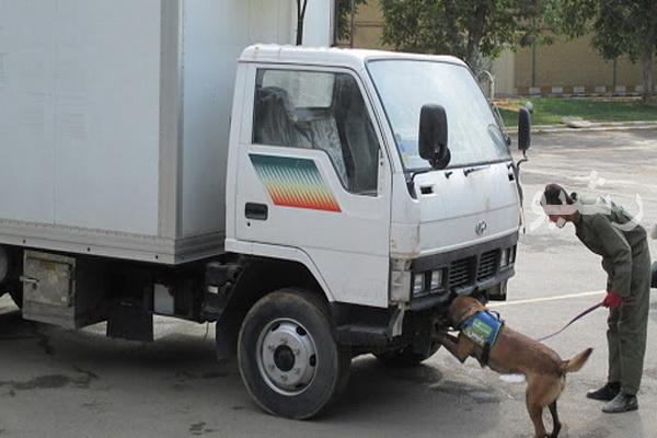 استقرار یک قلاده سگ مواد یاب در گمرک تمرچین پیرانشهر