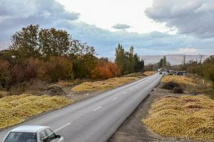 انباشت سیب در کنار جادههای آذربایجانغربی ممنوع است