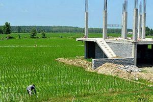 ضرورت کاهش فاصله شناسایی زود هنگام تغییر کاربری اراضی کشاورزی