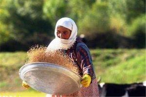 19 صندوق اعتبارات خرد زنان روستایی در شهرستان میاندوآب فعالیت می کنند
