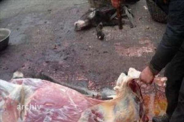 یک سال زندان برای فروشنده گوشت الاغ در تبریز