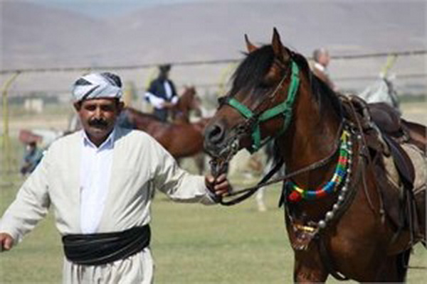 اولین واحد پرورش اسب کُردی در سقز افتتاح می شود
