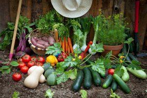 ۶۰۰ هکتار از مزارع مهاباد به کشت سبزی و صیفی اختصاص یافت