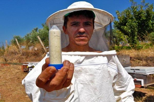 صادرات زهر زنبور از ترکیه
