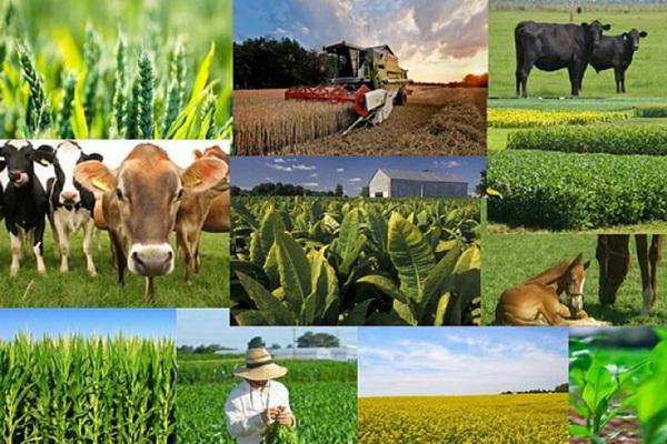 ۴۰ پروژه بخش کشاورزی در شهرستان مهاباد به بهره برداری رسید