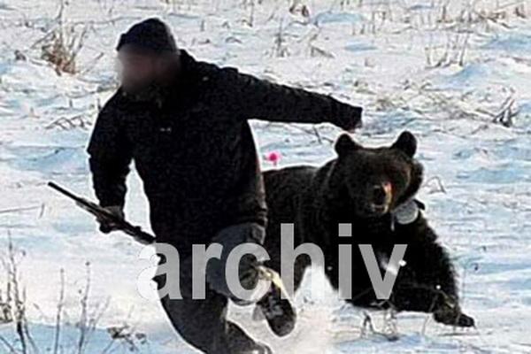 حمله خرس خمشگین موجب مصدوم شدن یک شهروند پیرانشهری شد