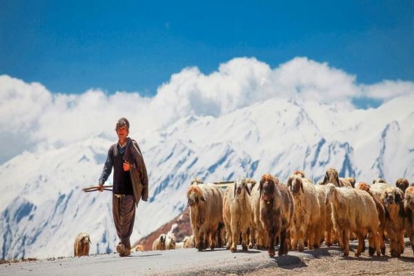 حدود ۷ هزار خانوار عشایری آذربایجان غربی تحت پوشش بیمه اجتماعی قرار گرفتند