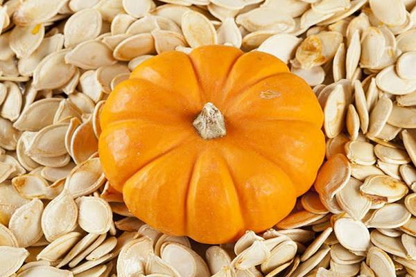 پیش بینی برداشت حدود 1800 تن محصول کدو آجیلی از مزارع نقده 5