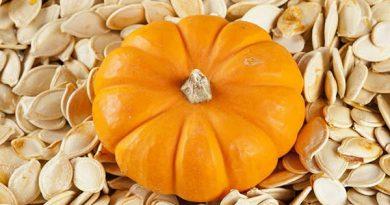 پیش بینی برداشت حدود 1800 تن محصول کدو آجیلی از مزارع نقده