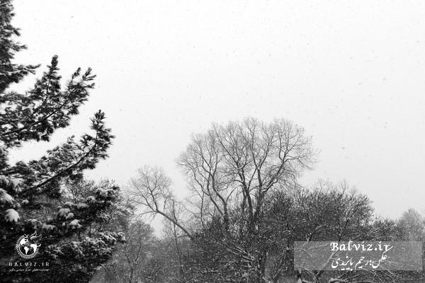 برف و باران آذربایجان غربی را فرا میگیرد