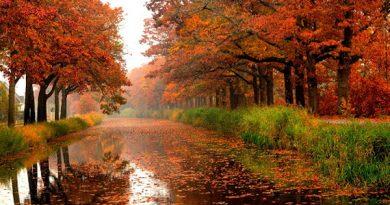 عکس/ بارش باران موجب تغییر و دگرگونی محیط و جذابیت طبیعت می شود