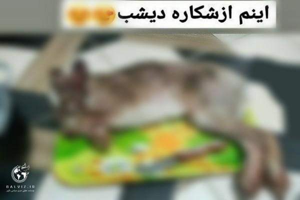 شکارچی متخلف که اقدام به انتشار شکار خود در فضای مجازی کرده بود دستگیر شد