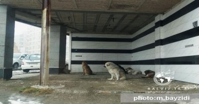 """سایت """"سگهای بلا صاحب"""" به زودی در شهرستان مهاباد آماده سازی می شود"""