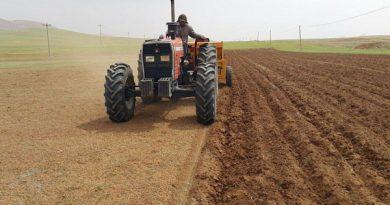 بیش از 3 هزار هکتار از مزراع مهاباد زیر کشت جو اختصاص یافت