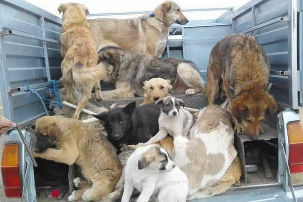 در صورت مشاهده انتقال سگ های بلاصاحب به مهاباد تماس بگیرید