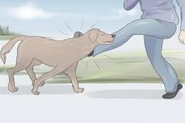 در صورت بروز هر گونه حیوان گزیدگی با واحد پیشگیری از بیماری هاری،مهاباد تماس بگیرید