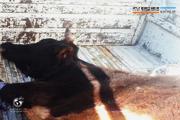 انفجار مین در سردشت موجب تلف شدن یک راس حیوان اهلی شد
