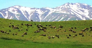 آماده باش تیم های گشت یگان حفاظت استان از اراضی ملی در ایام نوروز
