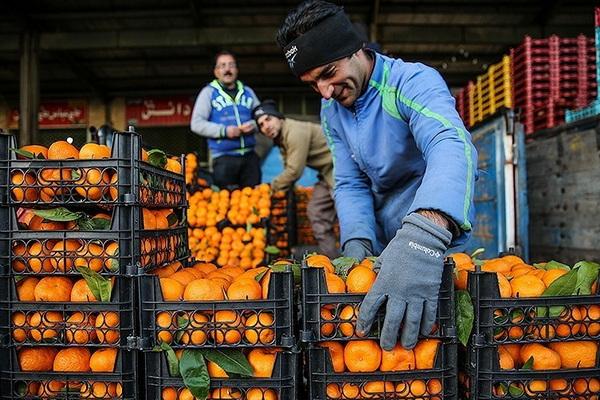 برای شب عید آذربایجان غربی ۱۶۰۰تن میوه در نظر گرفته شده است