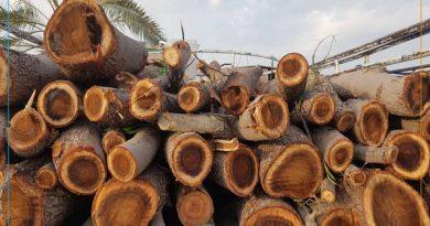 بیش از 30 تن چوب قاچاق در مهاباد توقیف شد