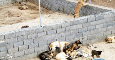 سایت سگهای بلاصاحب در مهاباد
