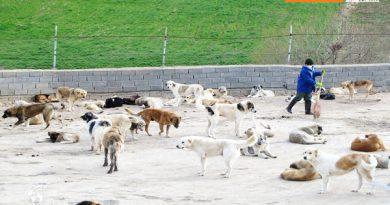 مشکلات سایت حیوانات بلا صاحب مهاباد بررسی شد
